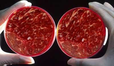 Carne envasada